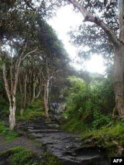 The Inca Trail – Ngày Thứ 2