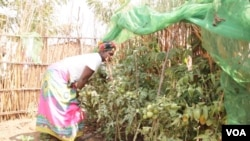 Malawi Victory Gardens Campaign