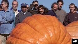 Espectadores en Rhode Island observan una calabaza gigante similar a la cultivada en la feria de Topsfield, la cual pesó 911 kilos (2.009 libras).