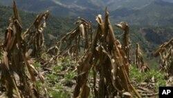 Milhares de pessoas afectadasa pela fome nos Gambos - 1:49