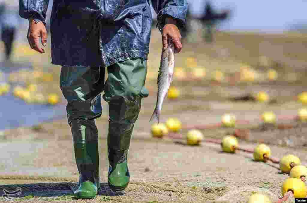 پایان فصل صید ماهی در میانکاله مازندران عکس: مصطفی حسن زاده