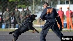 Un chien de l'armée brésilienne attaque un manifestant lors d'une manifestation anti- hooligan de football à Brasília le 3 mai 2013.