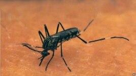 Mosquito bites a human arm..