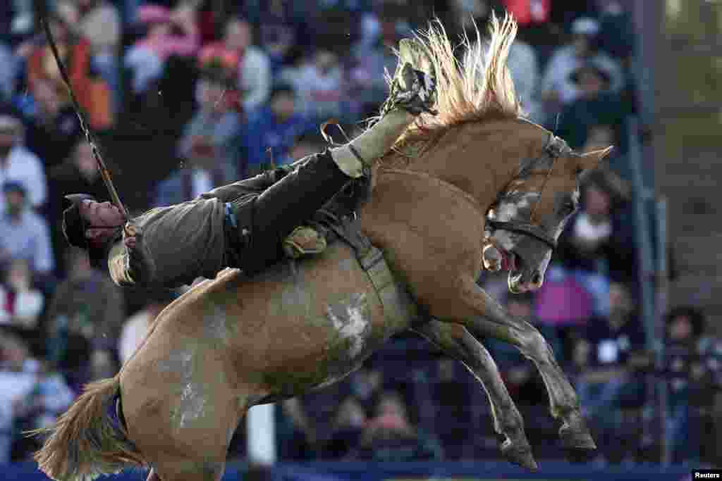 A gaucho rides a wild horse during the annual celebration of Criolla Week in Montevideo, Uruguay, April 15, 2014.