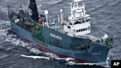 FILE - Japanese whaling ship Yushin Maru No. 2 sails in the Southern Ocean off Antarctica.