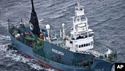 Săn cá voi cho mục đích thương mại đã bị cấm từ năm 1986, nhưng Nhật Bản tiếp tục săn bắt nhờ vào một kẽ hở cho phép săn bắt cho các mục tiêu khoa học.