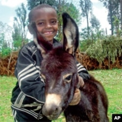 A boy and his donkey in rural Ethiopia. Children often use donkeys to travel to school