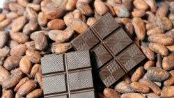 Emplois: les Camerounais misent sur la relance de la filière cacao