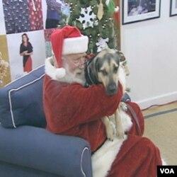 Praznični pokloni za napuštene pse