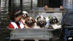 강아지들과 함께 대피하는 방콕 여성