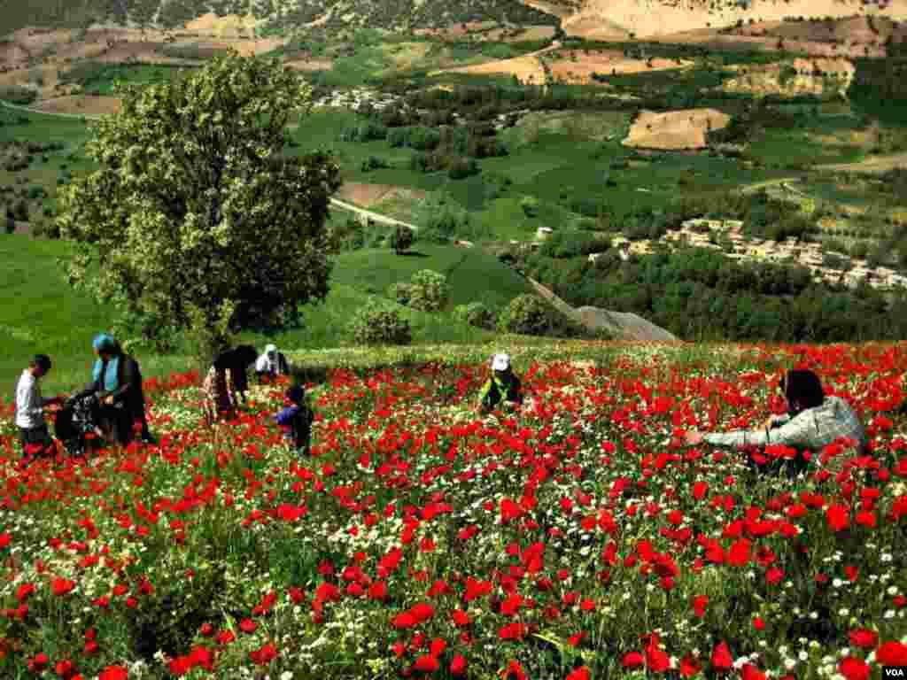 روستای زلان، جوانرود - کرمانشاه عکس: علی اکبر قیطولی (ارسالی شما)
