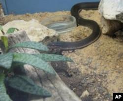 سانپوں والا گھر