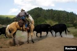 Seorang koboi bernama Rollo Mangus di dekat Ignacio, Colorado 12 Juni 2014. (Foto: Reuters)
