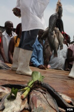 Fishermen at the Ggaba fish auction, Sept 25, 2013 (Hilary Heuler/VOA)