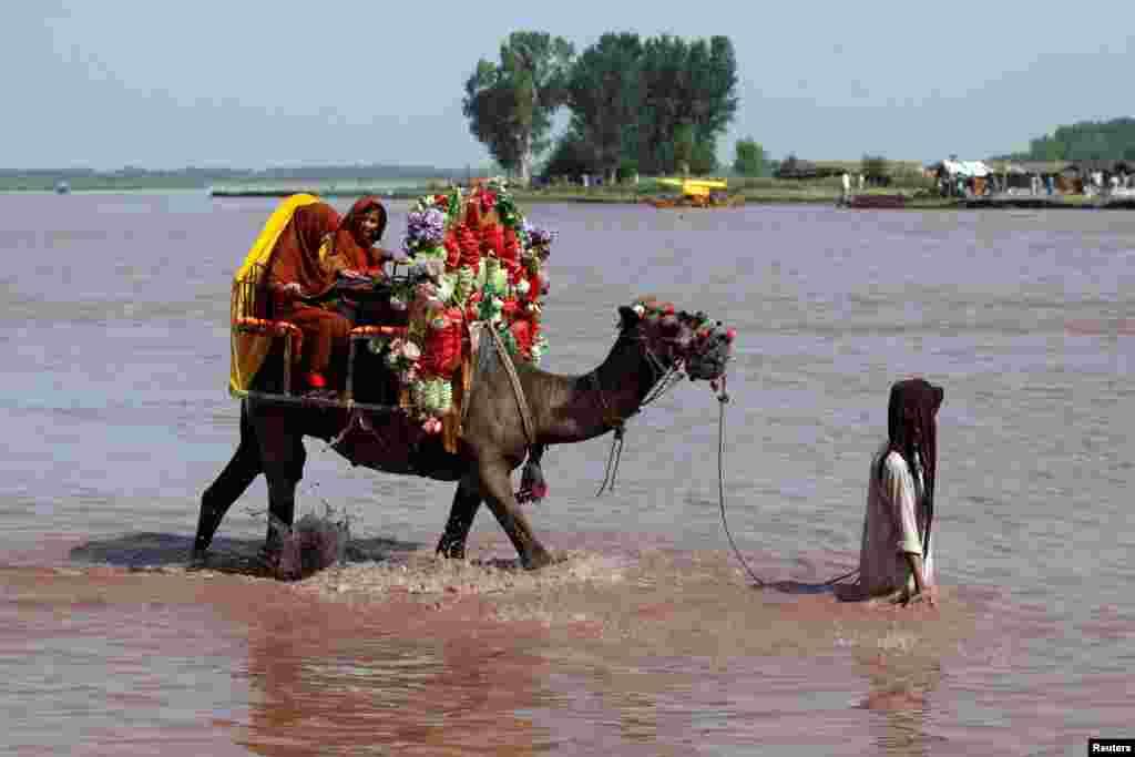 شتر سواری کودکان در رودخانه سرداریاب منطقه چهارسده در پشاور