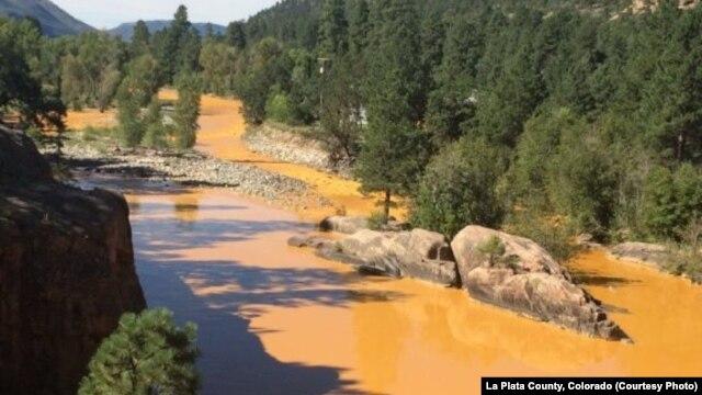 Aguas color amarillo mostaza en el rio Ánimas en el Condado La Plata de Colorado.