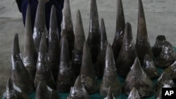 Sừng tê giác chở từ Nam Phi đến Hong Kong bị phát hiện và tịch thu