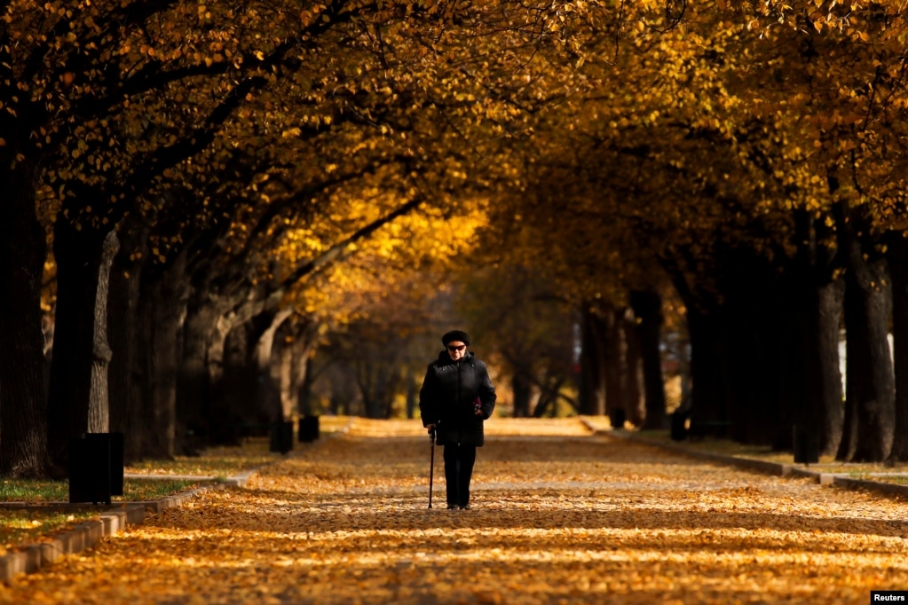 A woman walks under the trees with fall-colored leaves in Moscow, Russia.