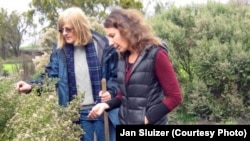 Margaret Smither-Kopperl (left) and Jessa Kay Cruz examine a coyote shrub brush in a hedgerow at Lockeford Plant Materials Center in Pleasanton, Calif