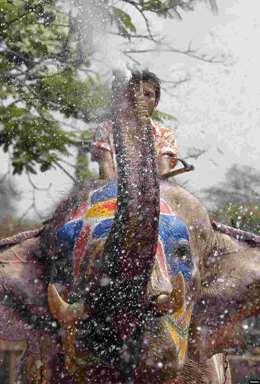 ایک ہاتھی اپنی سونڈھ سے پانی پھینک رہا ہے۔