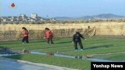 북한의 관영매체 조선중앙TV가 6일 안악군 오국협동농장의 농장원들이 영농철을 맞아 벼모판 관리에 힘쓰는 모습을 내보냈다. 이날 노동당 기관지 노동신문은 '식량부족은 세계적 문제'라고 강조했다.