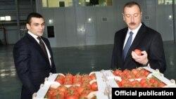 Səməd Qurbanov və İlham Əliyev «Baku Agropark» MMC-yə məxsus istixana kompleksində. 4 dekabr 2017.
