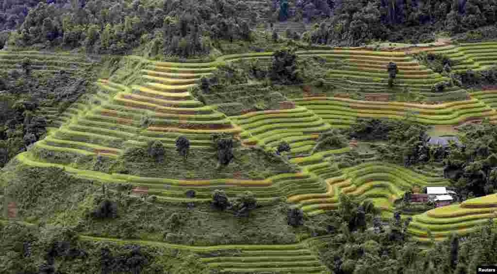 Terraced rice paddy fields are seen during the harvest season in Hoang Su Phi, north of Hanoi, Vietnam.