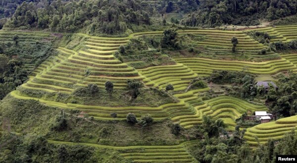 FILE - Terraced rice paddy fields are seen during the harvest season in Hoang Su Phi, north of Hanoi, Vietnam, Sept. 18, 2015.