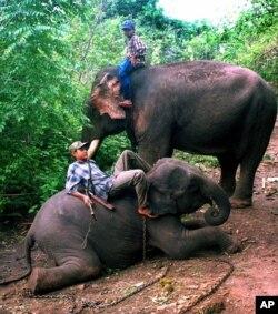 Gajah-gajah dipekerjakan di industri kayu di Myanmar (foto: dok).
