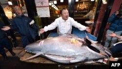 Con cá ngừ được bán với giá 193,2 triệu yên (1,8 triệu USD) trong phiên đấu giá đầu năm ngoái ở Tokyo.