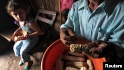 """FILE - A man holds corn harvested from the fields of Terrabona town, north Nicaragua, Oct. 11, 2012. """"The regional priority is to eradicate hunger by 2025,"""" FAO chief Jose Graziano da Silva says."""