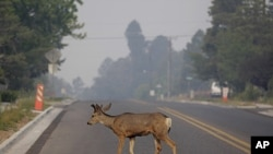 A deer crosses the street as smoke from the Las Conchas fire fills the air in Los Alamos, New Mexico, July 1, 2011.