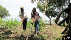 Farmers near Petit-Goâve, Haiti, prepare the soil for planting.