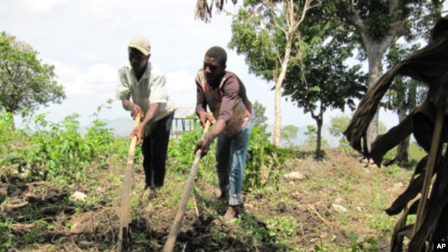 Farmers near Petit Guave, Haiti prepare the soil for planting.
