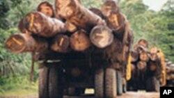 Organisasi lingkungan di London menuduh Tiongkok secara efektif menggalakkan penggundulan hutan di seluruh dunia (foto: dok).