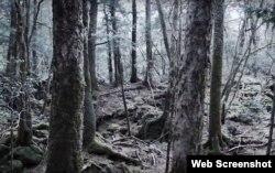 خودکشی کے جنگل کے نام سے موسوم اوکی گا ہارا کا ایک منظر