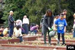 米歇尔.奥巴马同社区活动人士和学生们一起种菜浇水(美国之音 常晓拍摄)