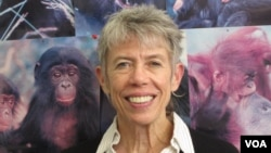 Anthropology Professor Kristen Hawkes says humans are distinct among primates when it comes to longevity. Credit: Lee J. Siegel, University of Utah