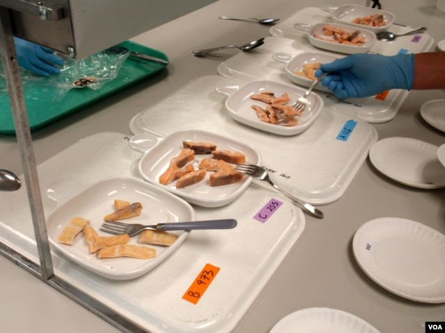 Trout samples at the Washington State University School of Food Science. Alternative feeds resulted in slightly different colors and textures in trout fillets. (VOA/T. Banse)