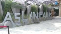 Türkiye'nin İlk Aslan Parkı