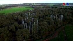 Meşələrdə karbon dioksid sınağı keçirilir
