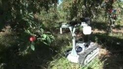 Fermada istifadə olunacaq çox funksiyalı IdaBot robotları