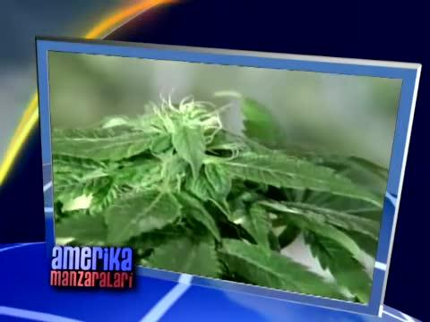 Marixuana bo'yicha yangi qonunlar/US Marijuana Laws Pass