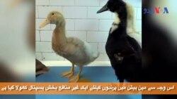 نیویارک میں پرندوں کا اسپتال