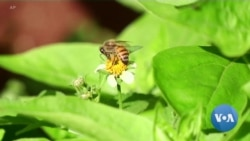 Protecting Pollinators is Crucial to Food Production