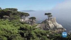 Amerikaga sayohat: Monterey ko'rfazi