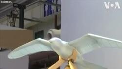 Đức trình làng robot chim tại Trung Quốc