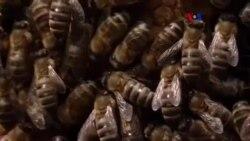 Panal termosolar contra varroa destructor