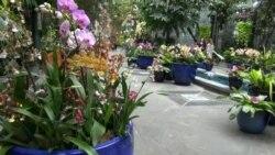 Ботаничката градина во Вашингтон со ретки видови орхидеи