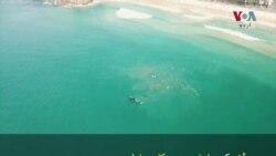 سڈنی کے ساحل پر دیوہیکل وہیل کی اٹکھیلیاں